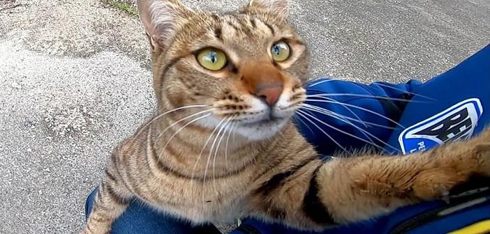 懐いてきた猫