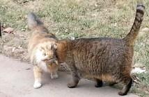 大学の猫達
