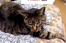 家の中に入ってきた猫