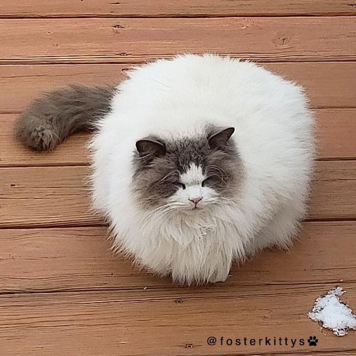 モフモフ猫