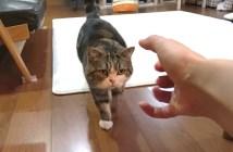 にぎにぎすると来る猫