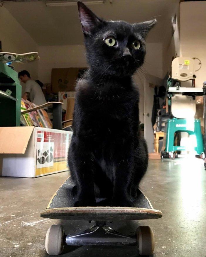 スケボー猫