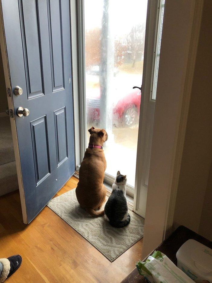 犬と一緒に外を見る猫