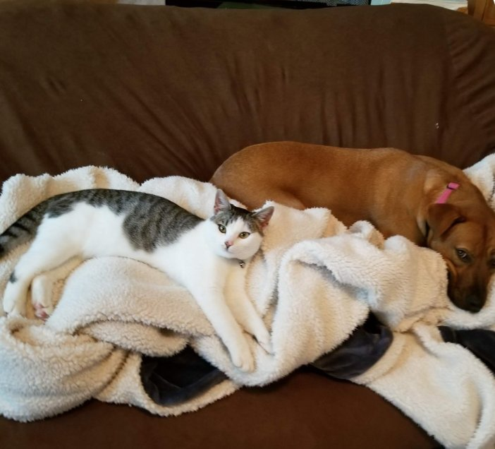 犬とくつろぐ猫