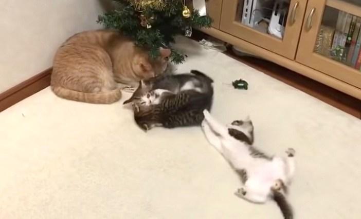 猫と元気な子猫