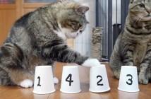 シャッフルゲームと猫
