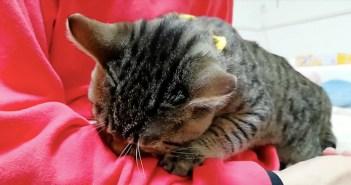 起きてすぐに甘える子猫