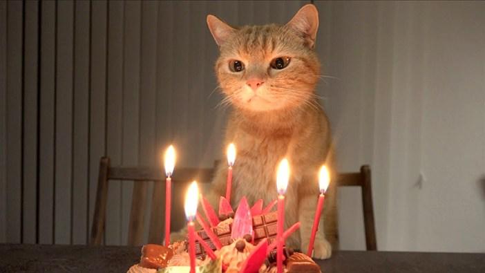 ケーキと猫