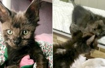 病気の状態で保護された子猫