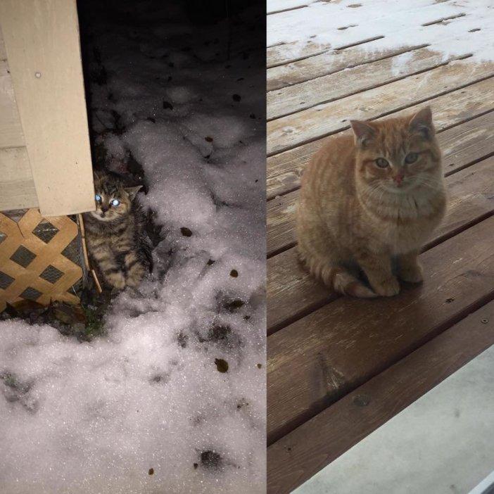外で保護された猫