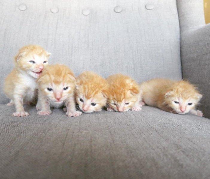 並ぶ子猫達