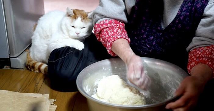 おばあちゃんに寄り添う猫