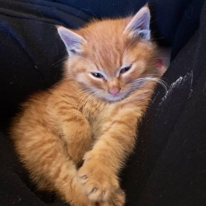 眠くなる子猫