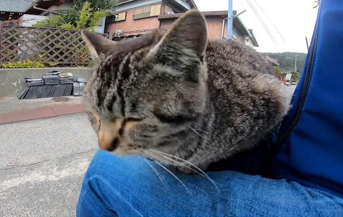 膝に座る猫