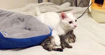 子猫を地震から守る猫