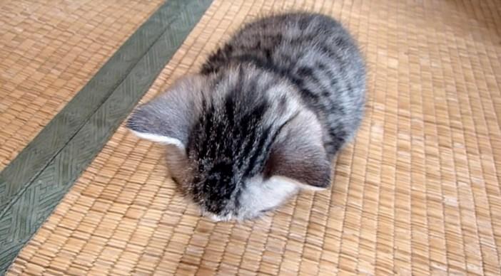 寝落ち子猫