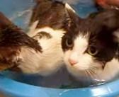 親子揃ってお風呂が大好き♪ 湯船から出そうとすると、可愛い反応が返ってきた ( *´艸`)♡