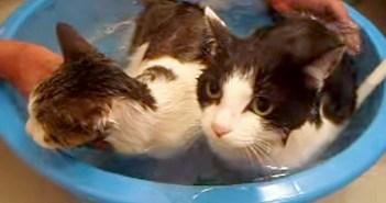 お風呂好きの猫の親子