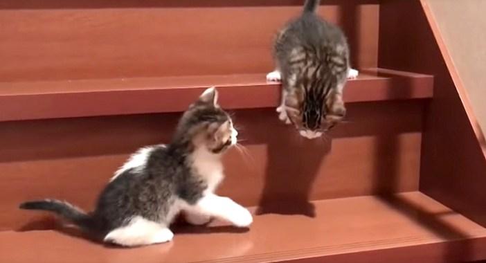 降りようとする子猫
