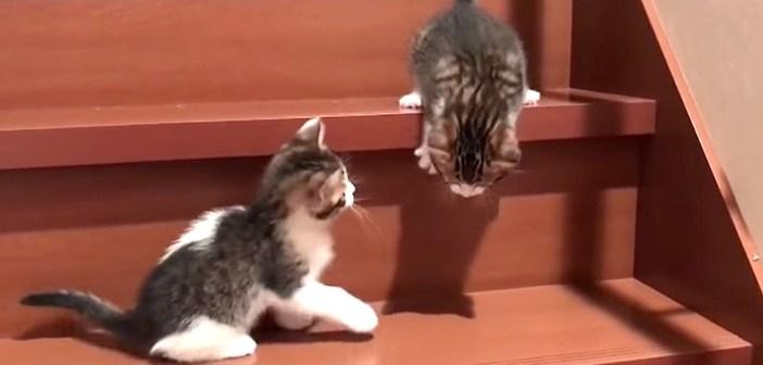 階段を降りる子猫