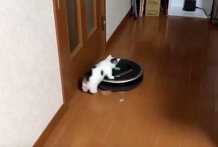 ルンバに乗る子猫