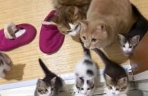 お風呂掃除と猫達