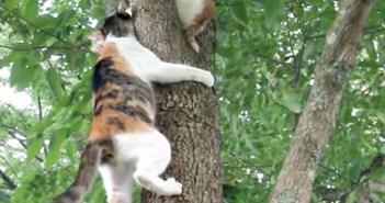 木に登る母猫