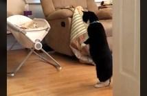 赤ちゃんが気になる猫