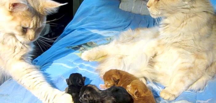 子猫のことが気になって、チョイチョイと触り始めた父猫。その様子をジッと見ていた母猫が驚きの行動に出た ( ゚Д゚)!
