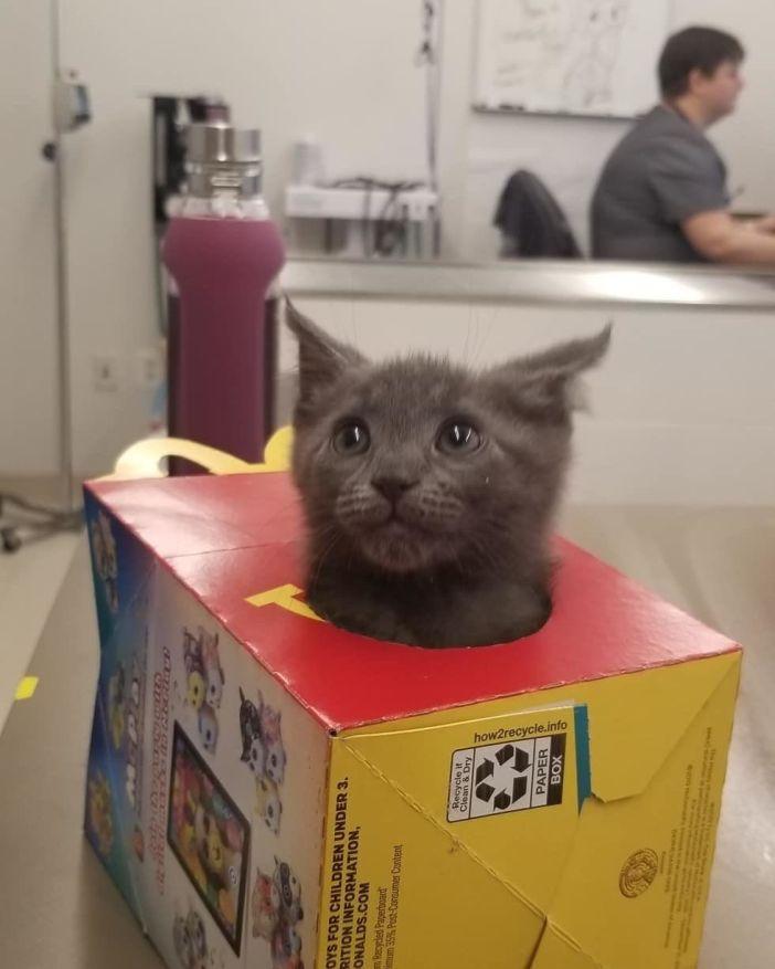 ひょっこり子猫