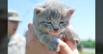 ヘリコプターから救い出された子猫