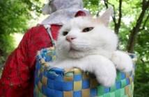 カゴに乗る猫
