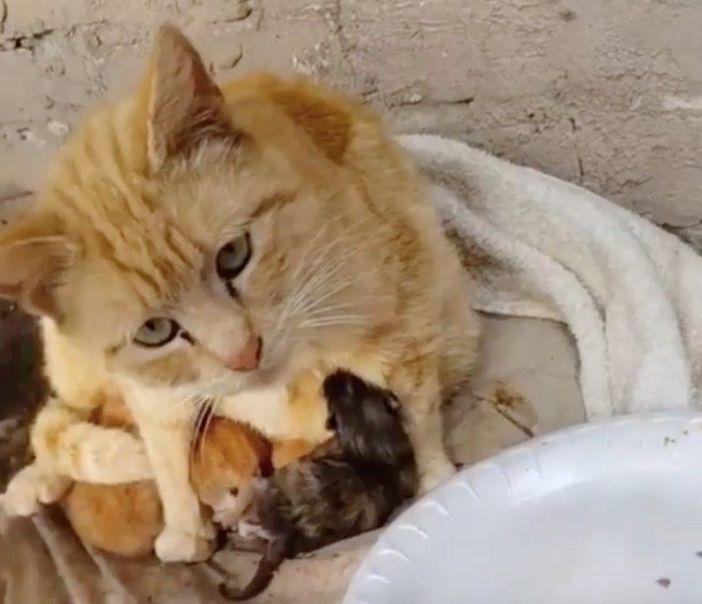 子猫達を守っていた母猫