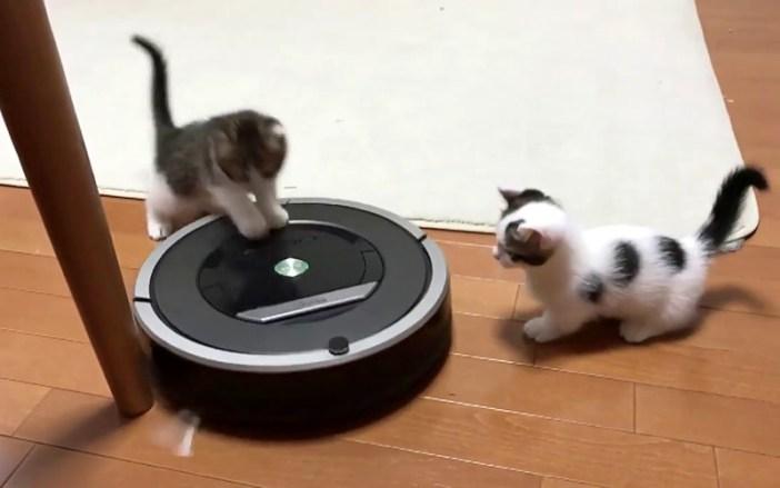 ルンバで遊ぶ子猫達