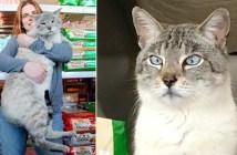 11kgの猫