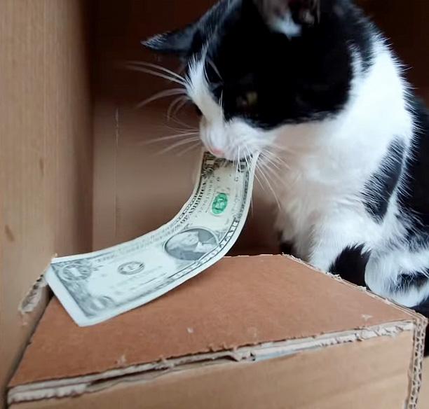 猫のATM