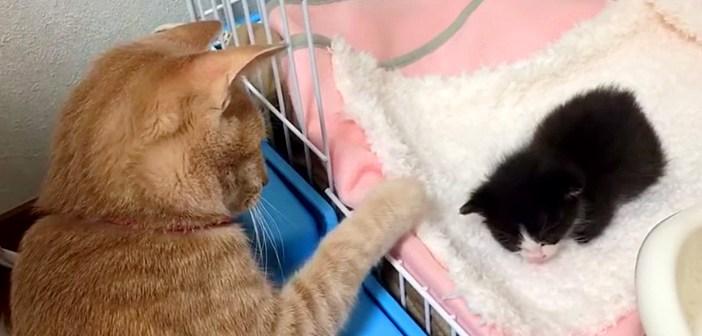 子猫を触りたい猫