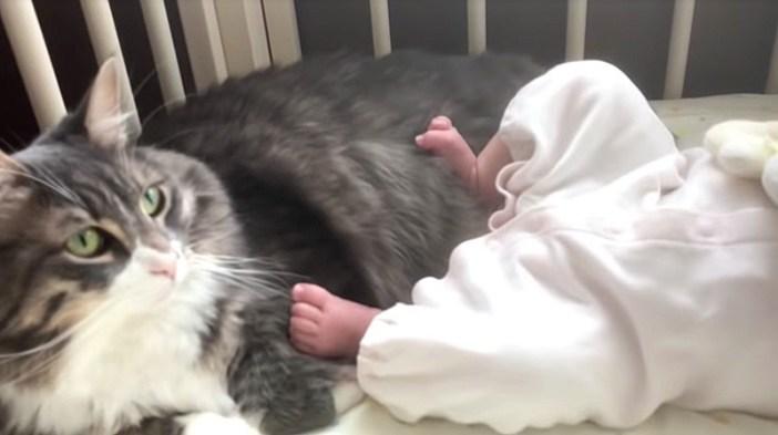 赤ちゃんと一緒にいたい猫