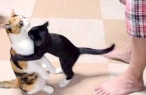 抱っこ待ちする猫