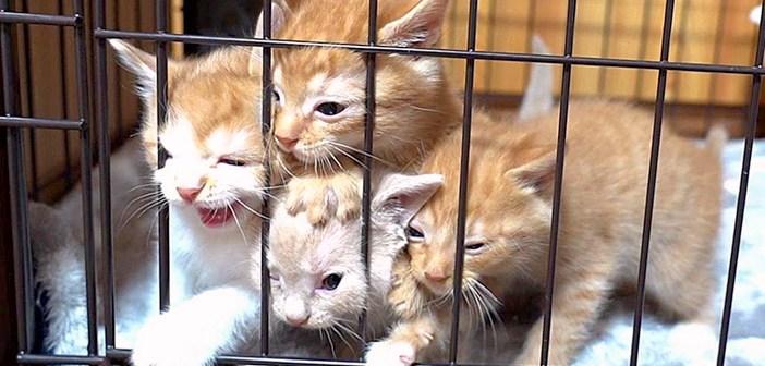 帰宅すると激しくお出迎えしてくれる子猫達。溢れんばかりのエネルギーで部屋中を駆け回る姿が可愛すぎる ( *´艸`)♡