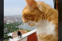 会話する猫とカラス