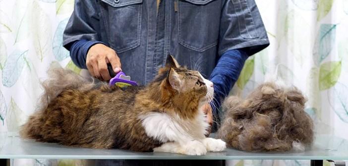 ファーミネーターと猫