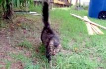 行方不明になっていた猫
