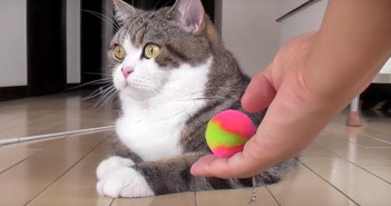 おもちゃ好きの猫さん