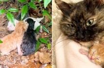 土砂降りの中で保護された猫の親子
