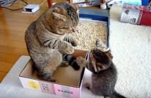お父さんを猫パンチする子猫