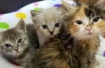 見つめる子猫達