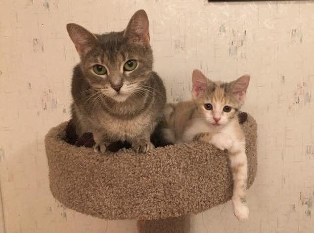 見つめる猫の親子