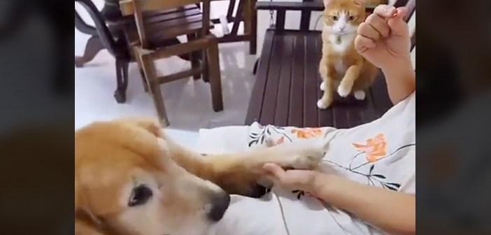 練習する猫