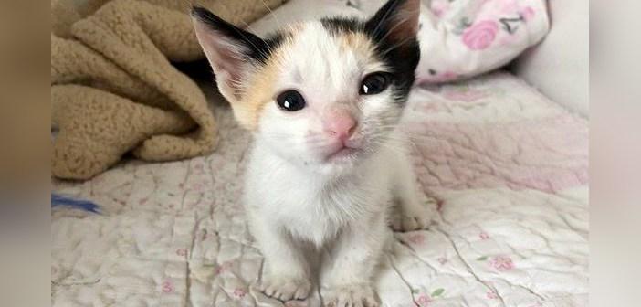 独りぼっちだった子猫